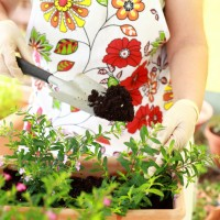 Elderly woman replanting flowers for better growth